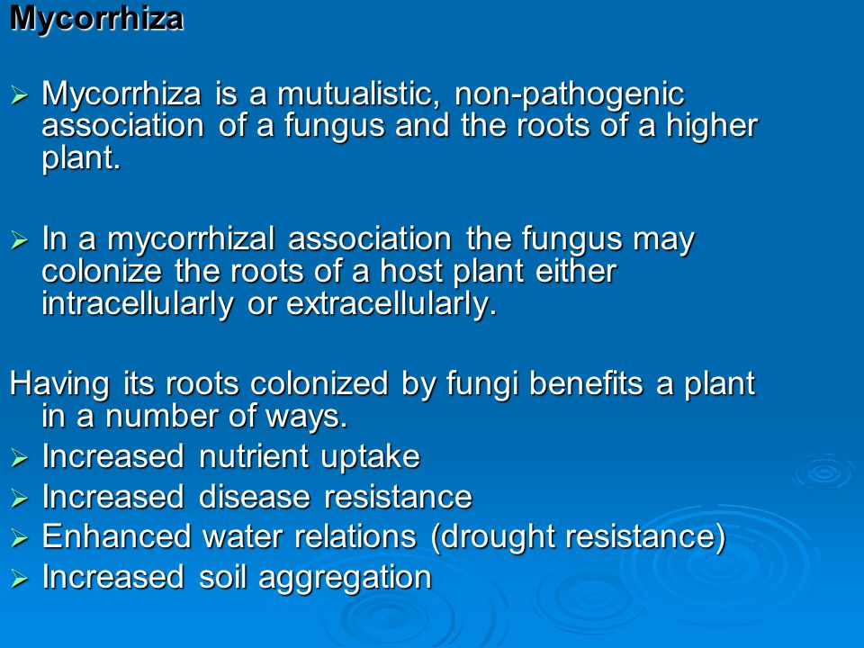 Mycorrhiza Mycorrhiza is a mutualistic, non-pathogenic association of a fungus and the roots of a higher plant.