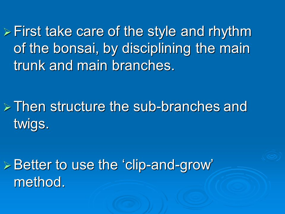 First take care of the style and rhythm of the bonsai, by disciplining the main trunk and main branches.