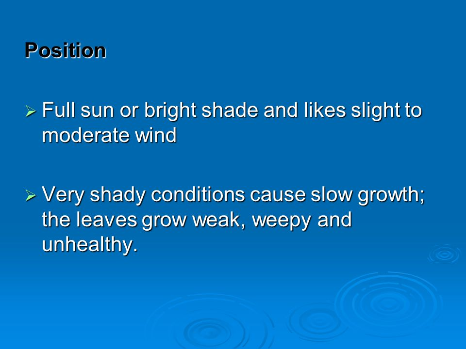 Position Full sun or bright shade and likes slight to moderate wind.