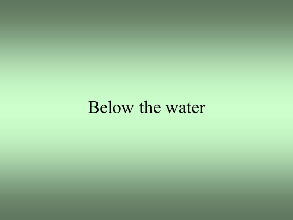 Below the water