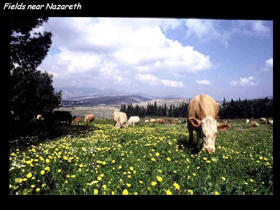 Fields near Nazareth