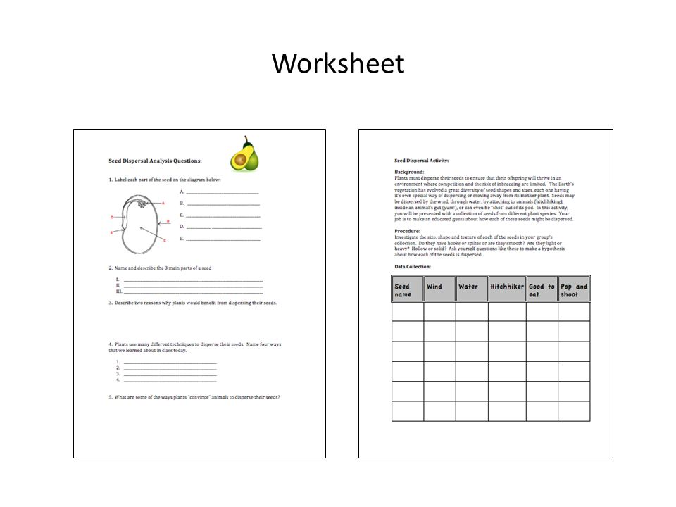 Learning Modules for 7th 12th Grade Life Sciences ppt video – Seed Dispersal Worksheet