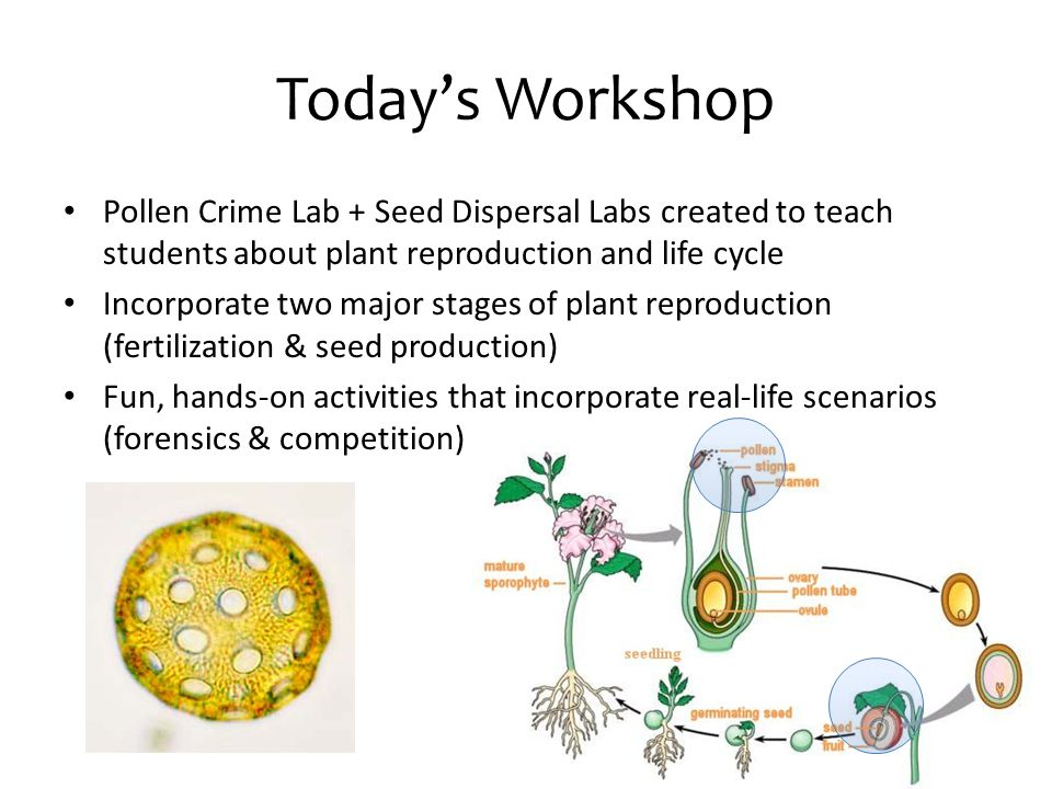 Today's Workshop Pollen Crime Lab + Seed Dispersal Labs created to teach students about plant reproduction and life cycle.