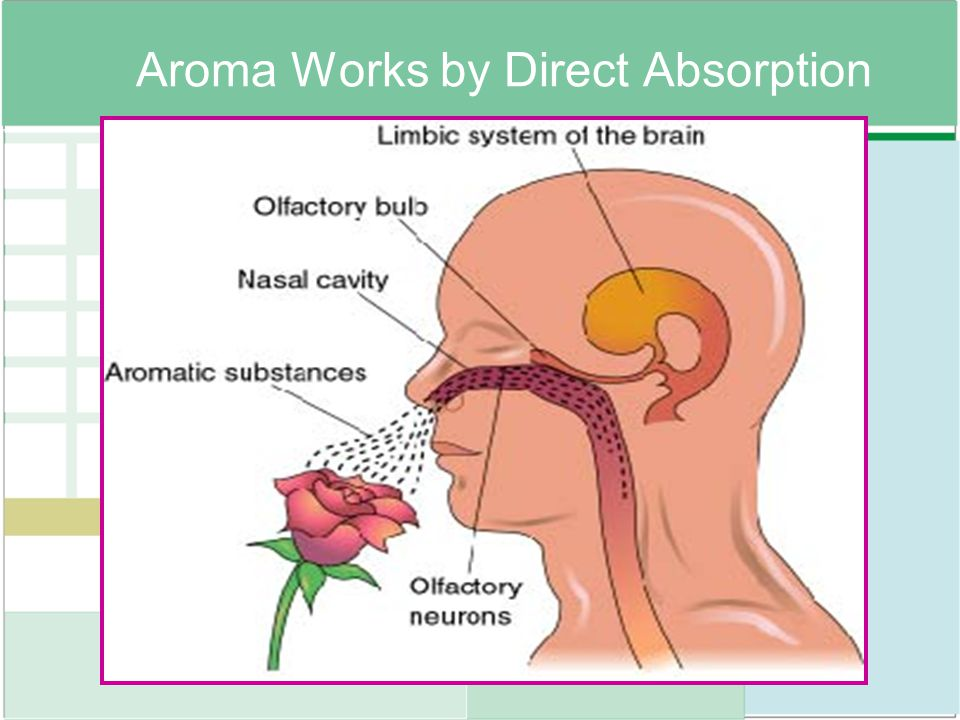 Aroma Works by Direct Absorption
