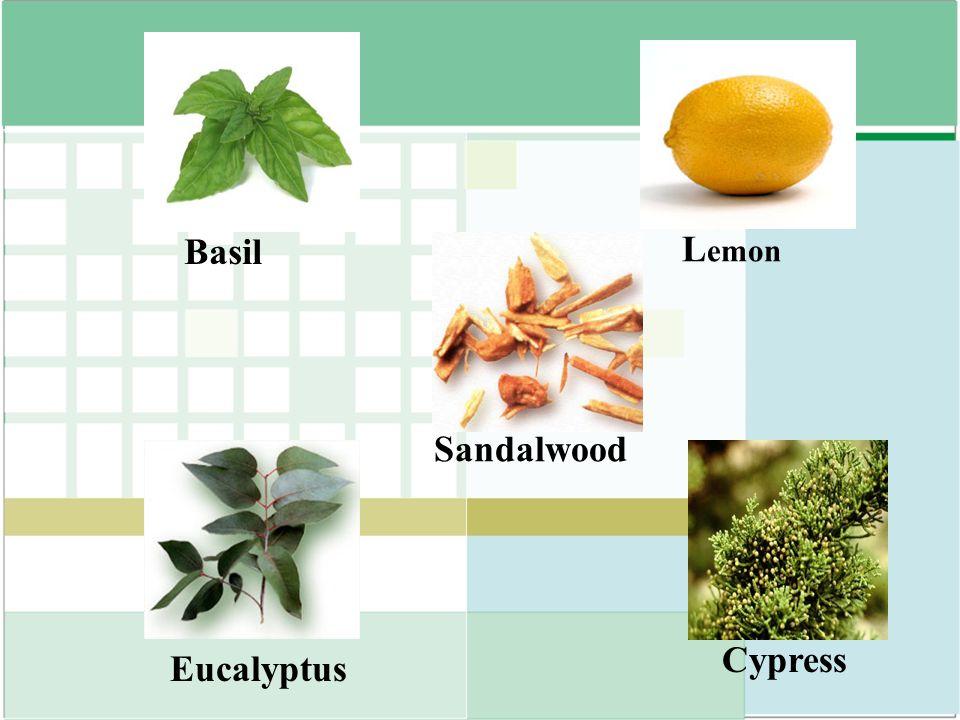 Basil Lemon Sandalwood Cypress Eucalyptus