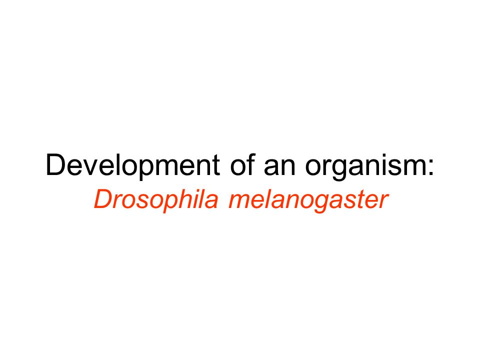 Development of an organism: Drosophila melanogaster