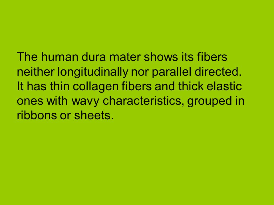 The human dura mater shows its fibers neither longitudinally nor parallel directed.