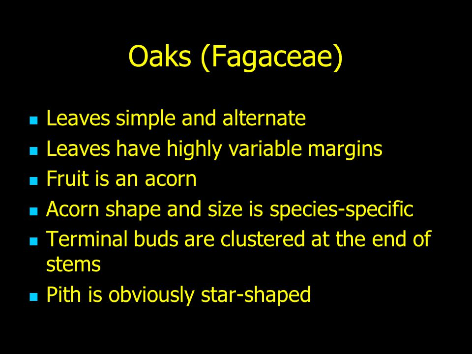 Oaks (Fagaceae) Leaves simple and alternate