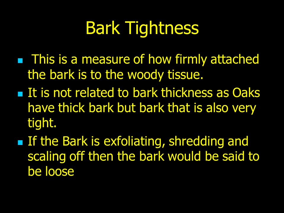 Bark Tightness This is a measure of how firmly attached the bark is to the woody tissue.