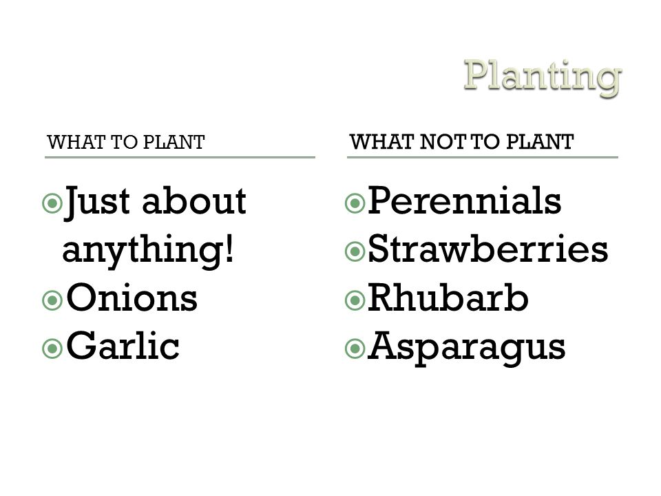 Planting Just about anything! Onions Garlic Perennials Strawberries