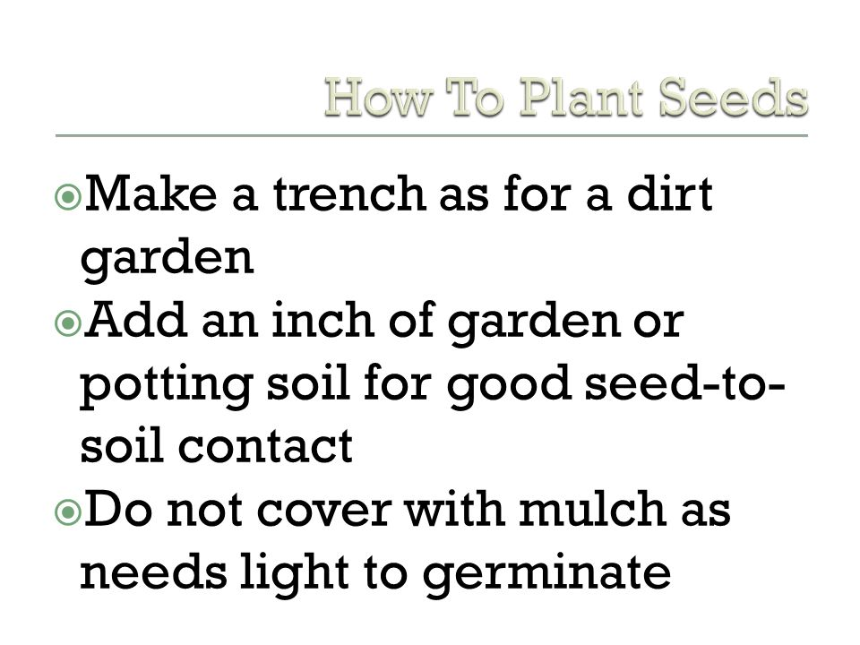 How To Plant Seeds Make a trench as for a dirt garden