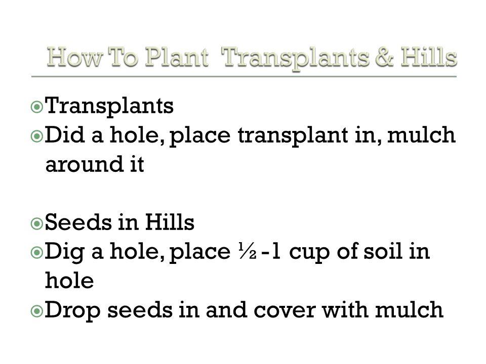 How To Plant Transplants & Hills