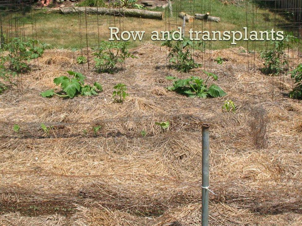 Row and transplants