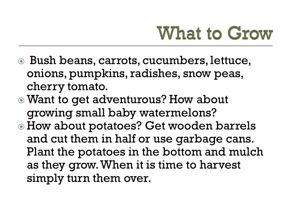 What to Grow Bush beans, carrots, cucumbers, lettuce, onions, pumpkins, radishes, snow peas, cherry tomato.