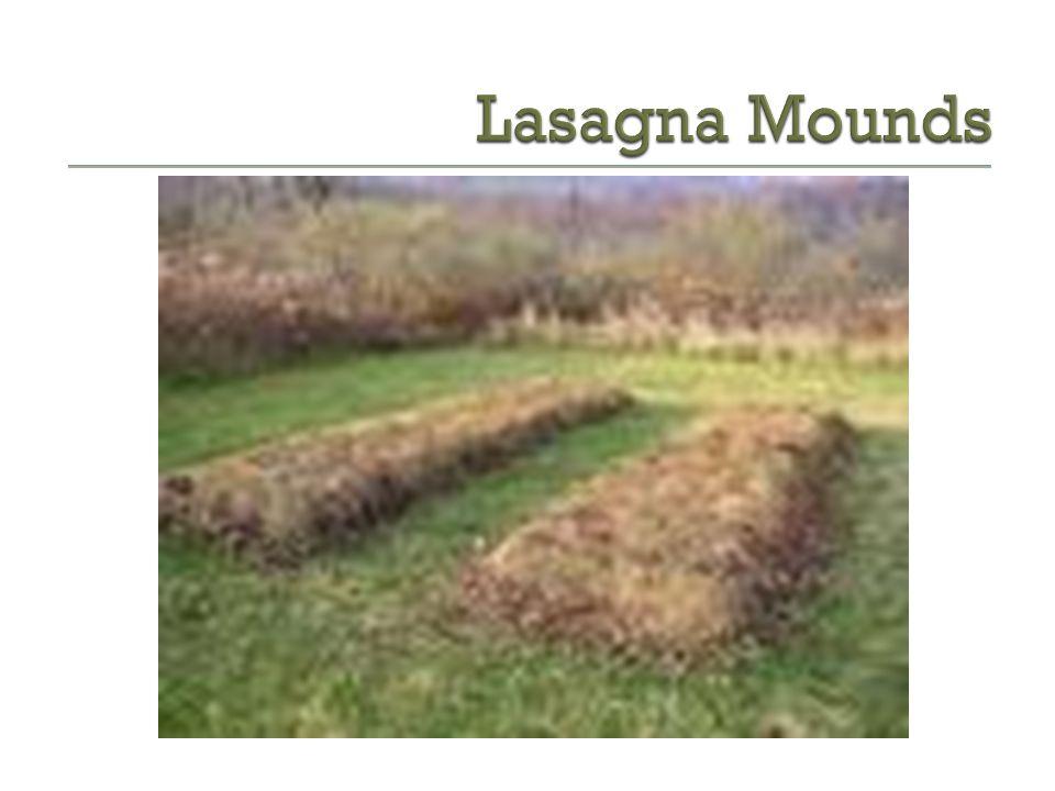 Lasagna Mounds