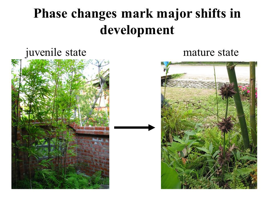 Phase changes mark major shifts in development