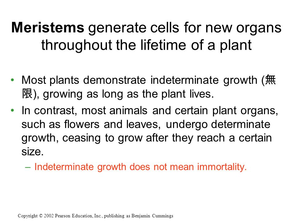 Meristems generate cells for new organs throughout the lifetime of a plant