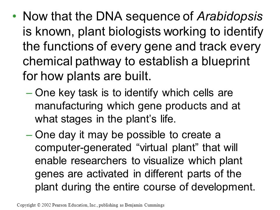 Now that the DNA sequence of Arabidopsis is known, plant biologists working to identify the functions of every gene and track every chemical pathway to establish a blueprint for how plants are built.
