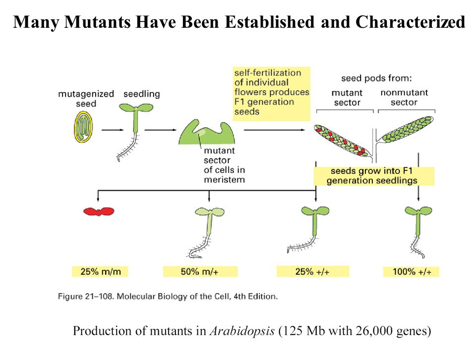 Many Mutants Have Been Established and Characterized