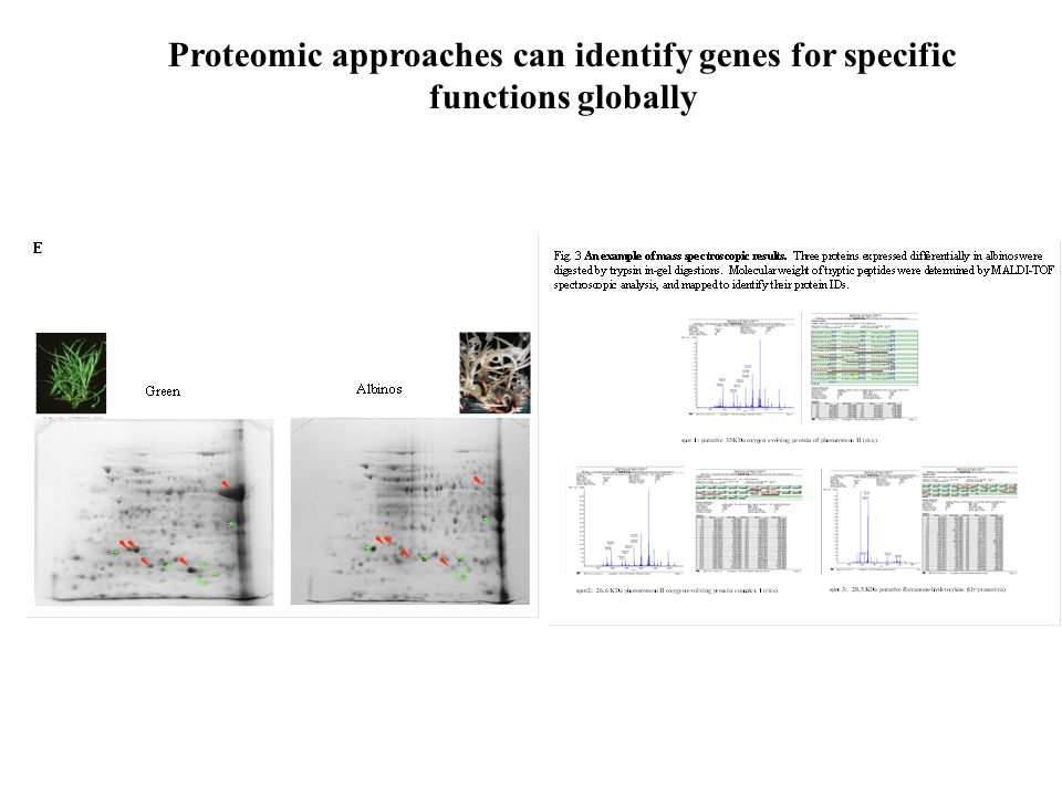 Proteomic approaches can identify genes for specific functions globally