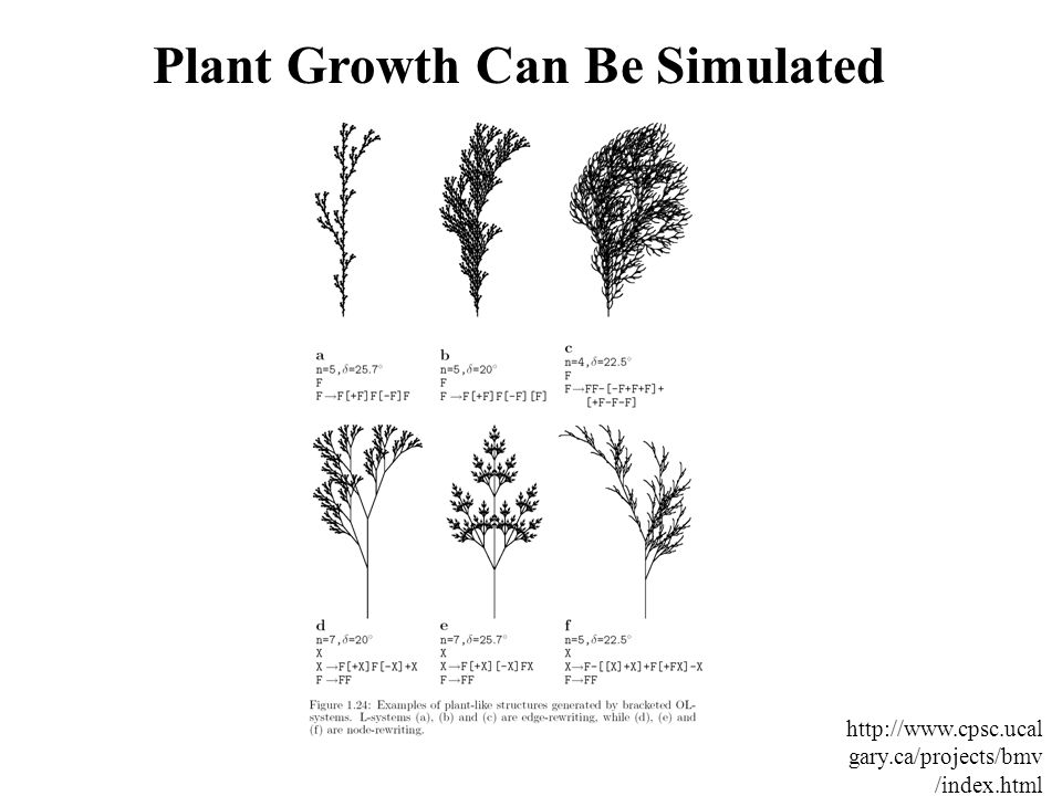 Plant Growth Can Be Simulated