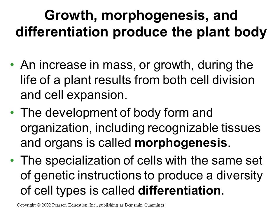 Growth, morphogenesis, and differentiation produce the plant body