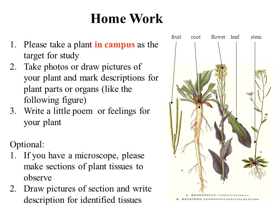 Home Work Please take a plant in campus as the target for study