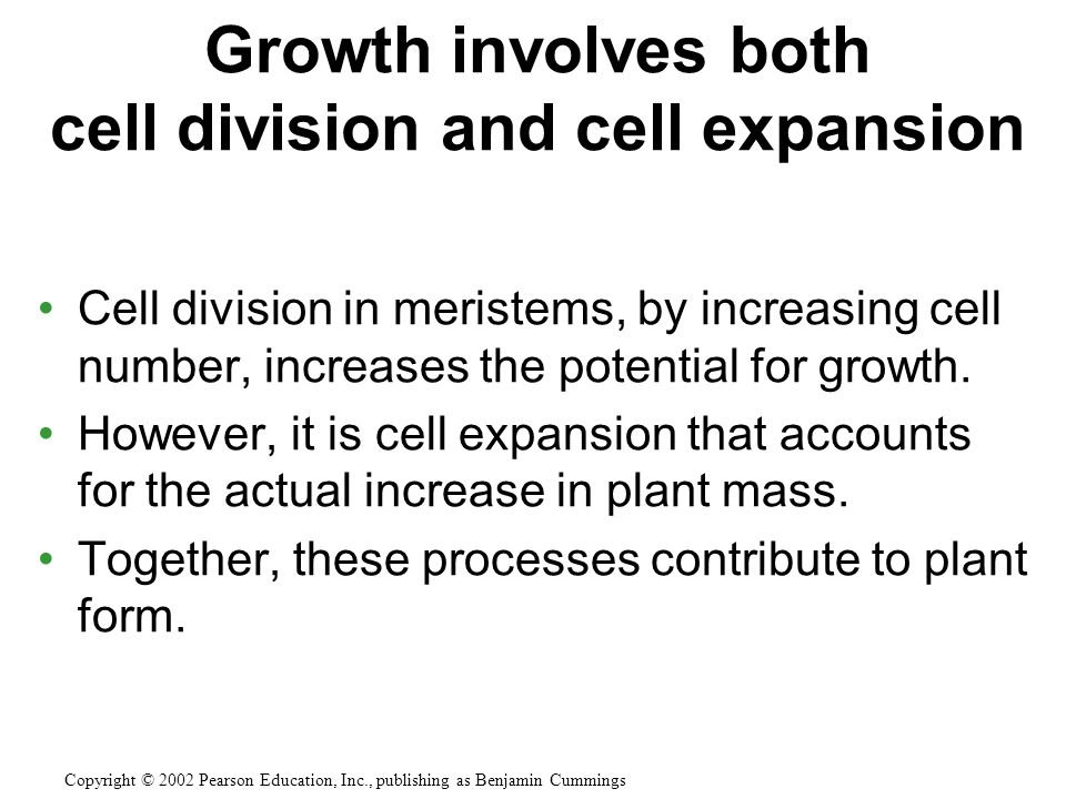 Growth involves both cell division and cell expansion