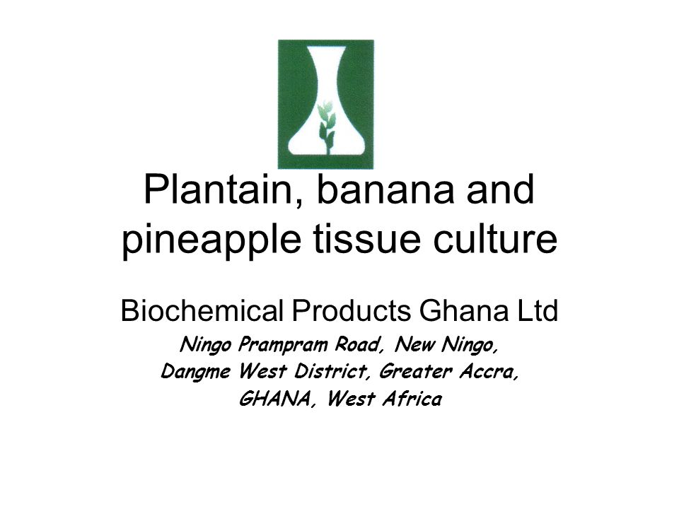 Plantain, banana and pineapple tissue culture