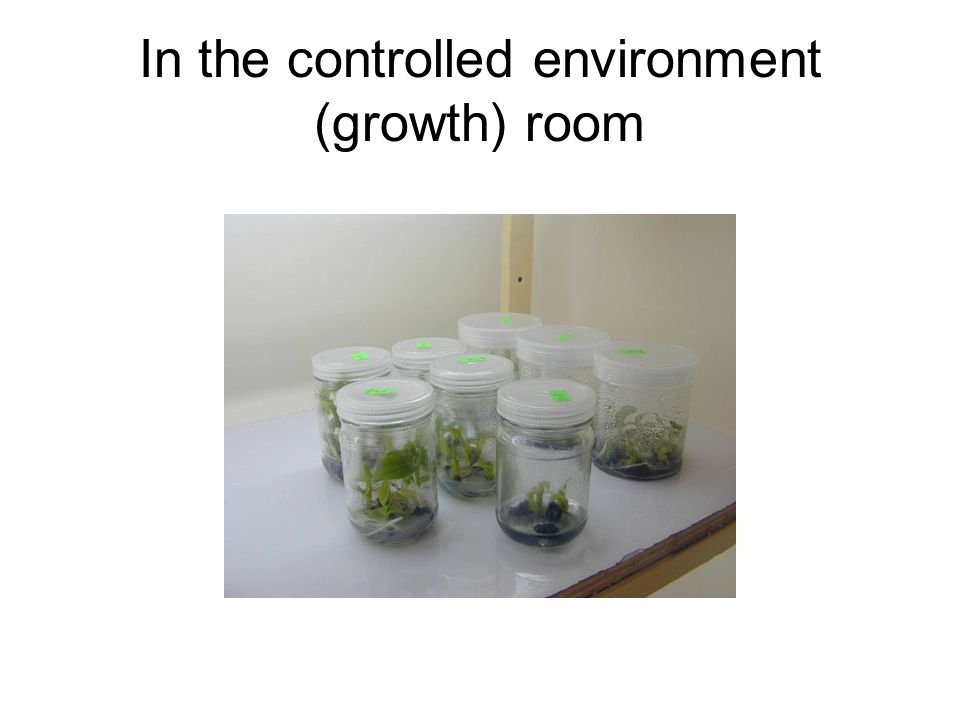 In the controlled environment (growth) room