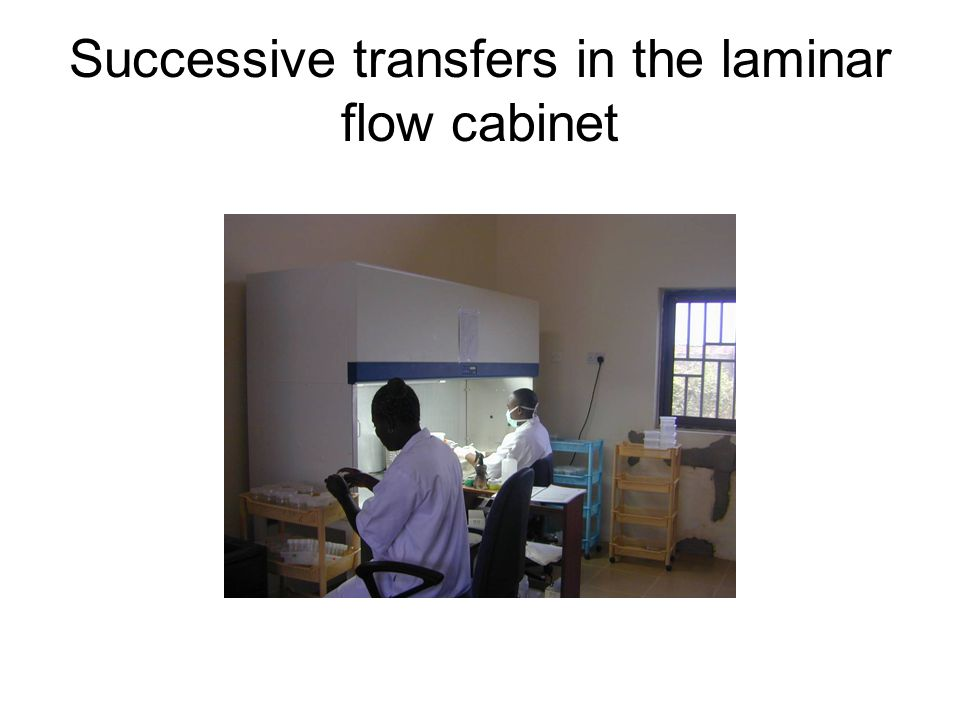 Successive transfers in the laminar flow cabinet