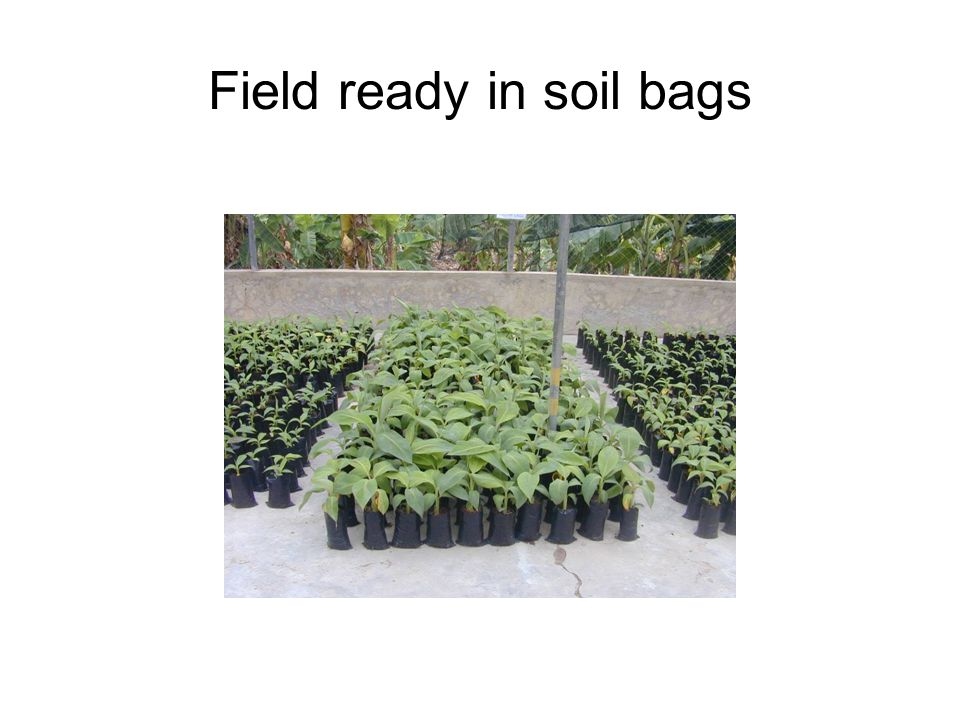 Field ready in soil bags