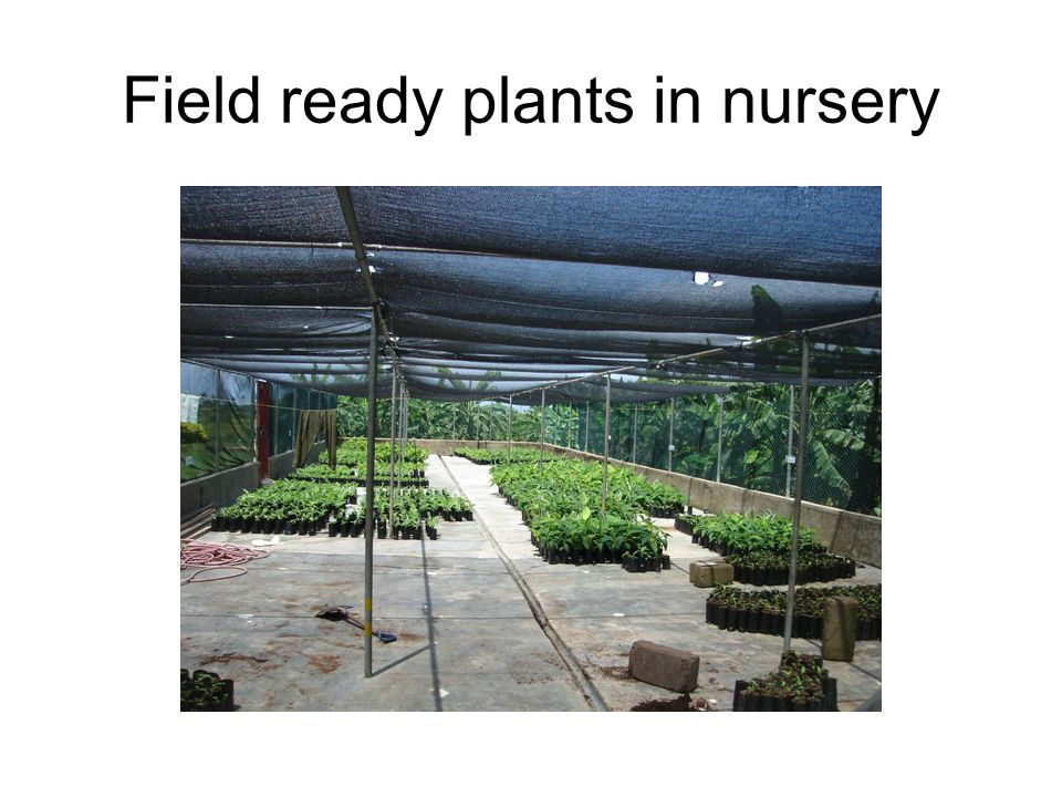 Field ready plants in nursery