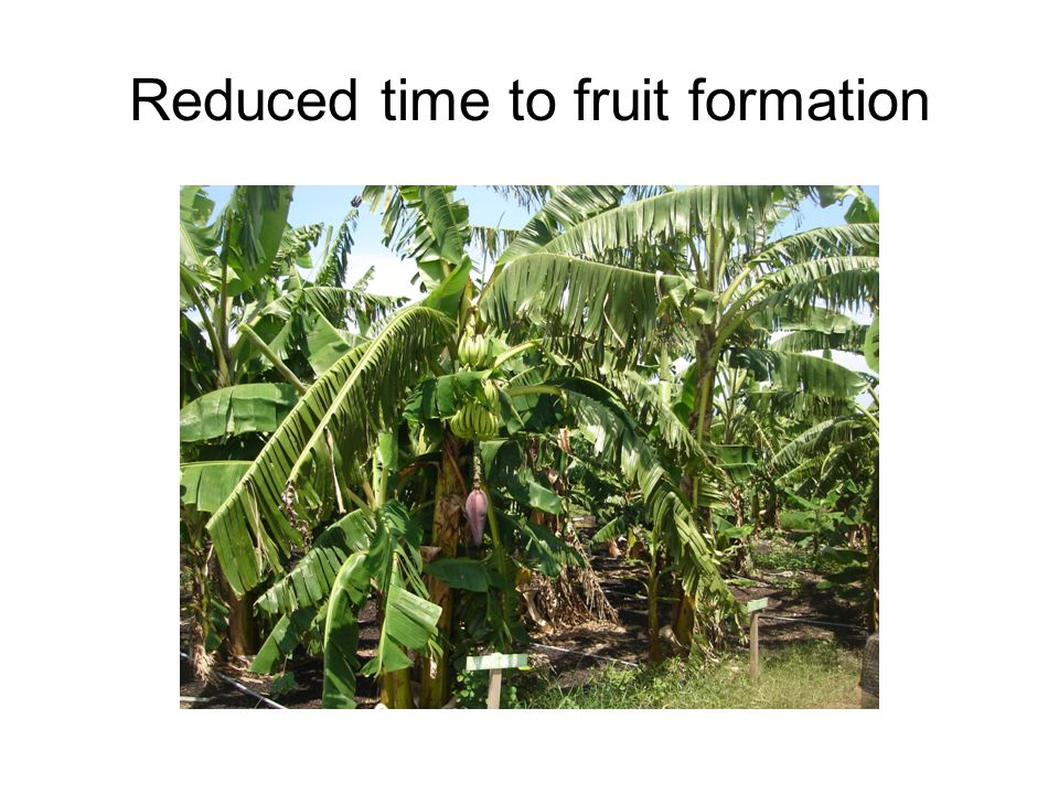 Reduced time to fruit formation