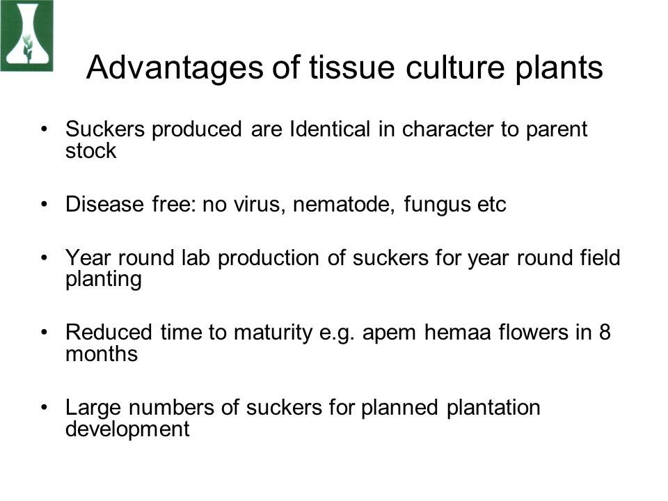 Advantages of tissue culture plants