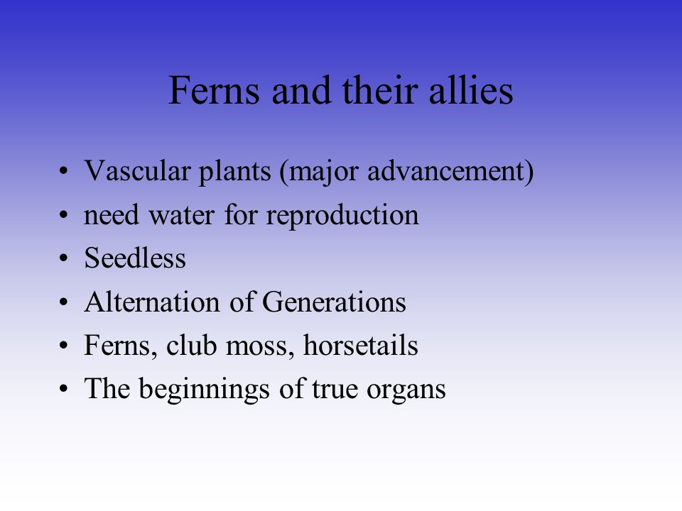 Ferns and their allies Vascular plants (major advancement)
