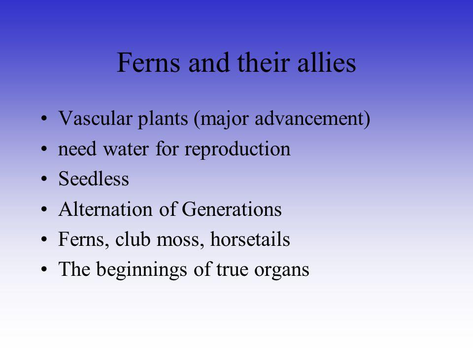 Ferns and their allies Vascular plants (major advancement)