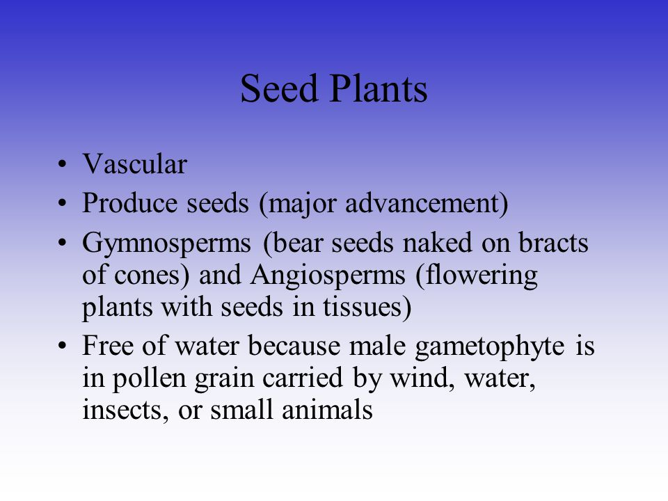 Seed Plants Vascular Produce seeds (major advancement)
