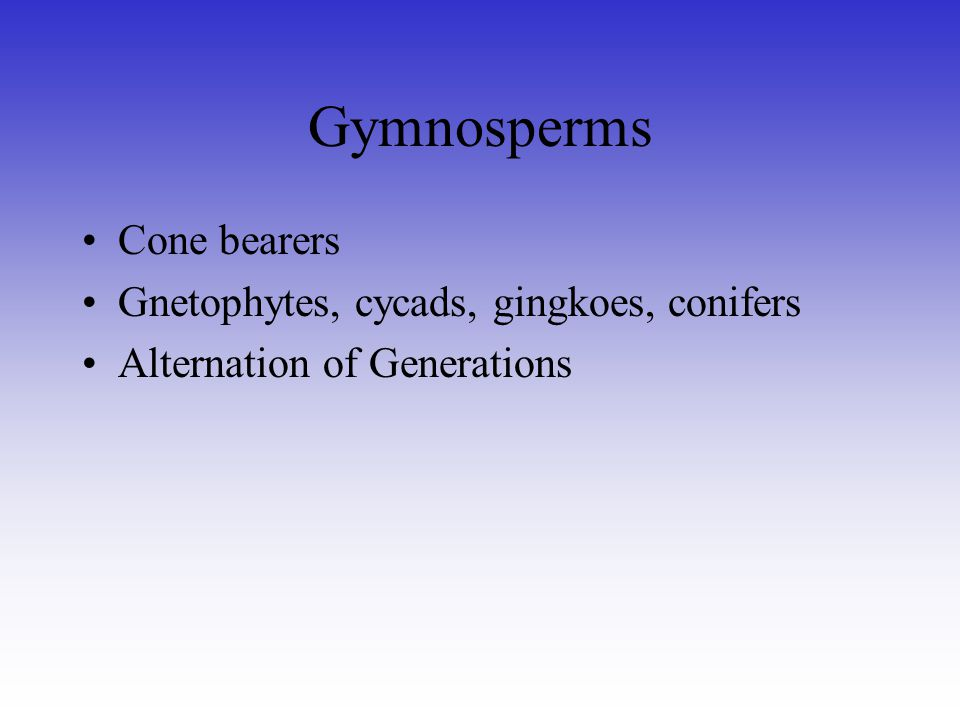 Gymnosperms Cone bearers Gnetophytes, cycads, gingkoes, conifers