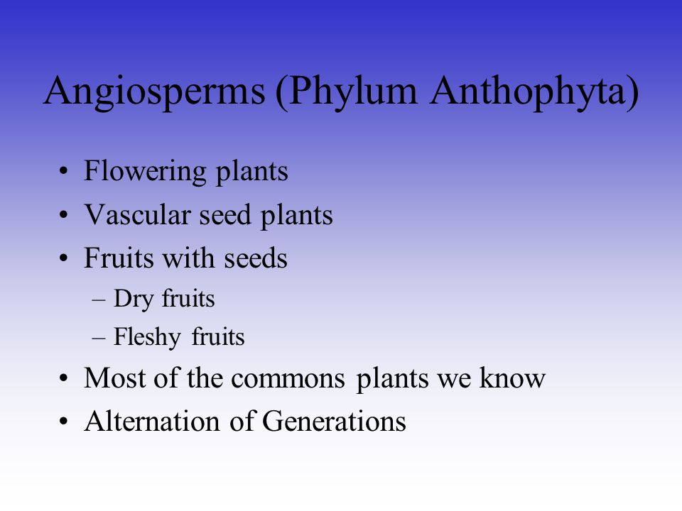 Angiosperms (Phylum Anthophyta)