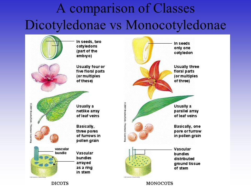 A comparison of Classes Dicotyledonae vs Monocotyledonae