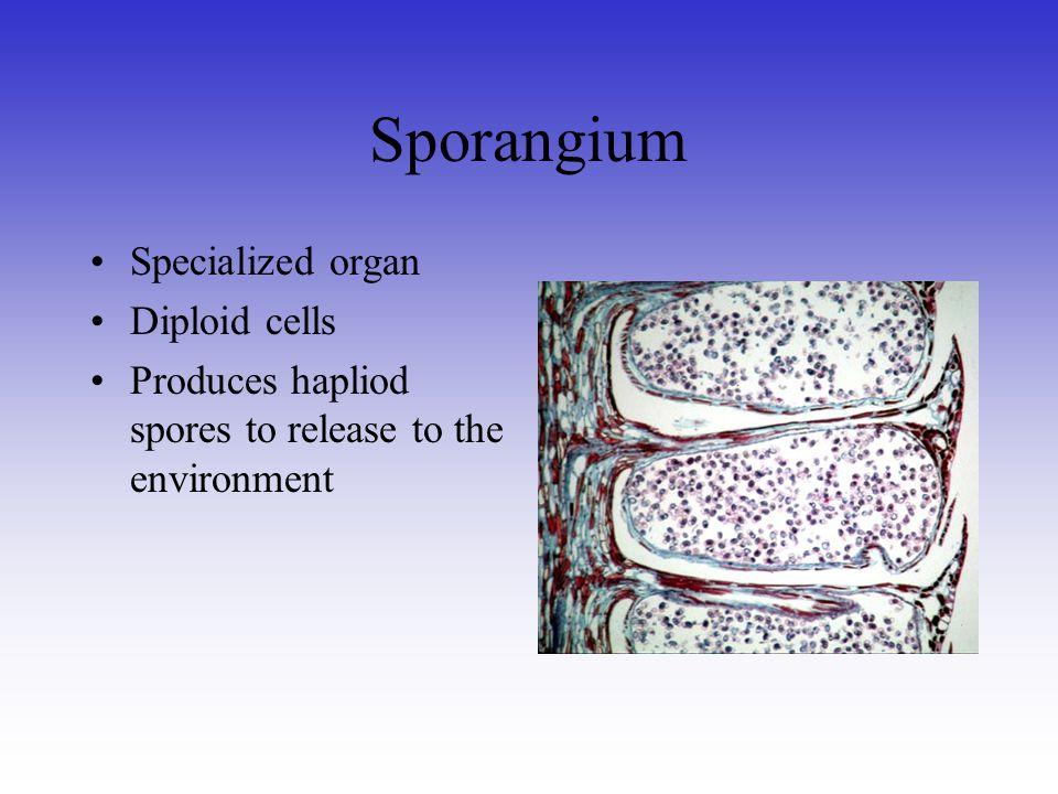 Sporangium Specialized organ Diploid cells
