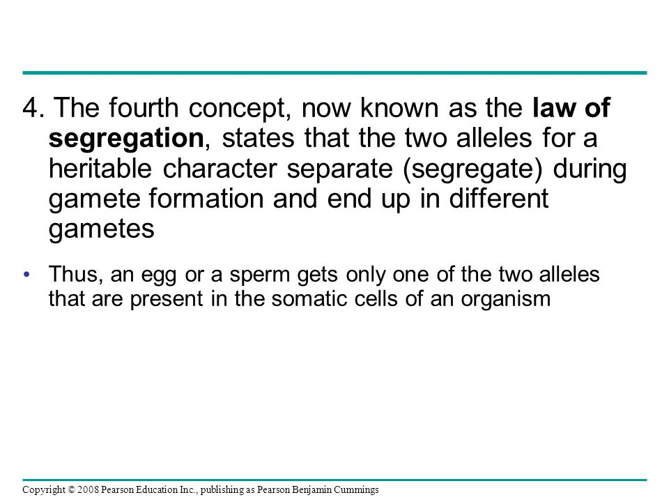 4. The fourth concept, now known as the law of segregation, states that the two alleles for a heritable character separate (segregate) during gamete formation and end up in different gametes