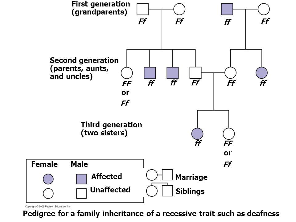 First generation (grandparents) Ff Ff ff Ff Second generation