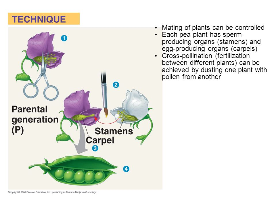 Mating of plants can be controlled