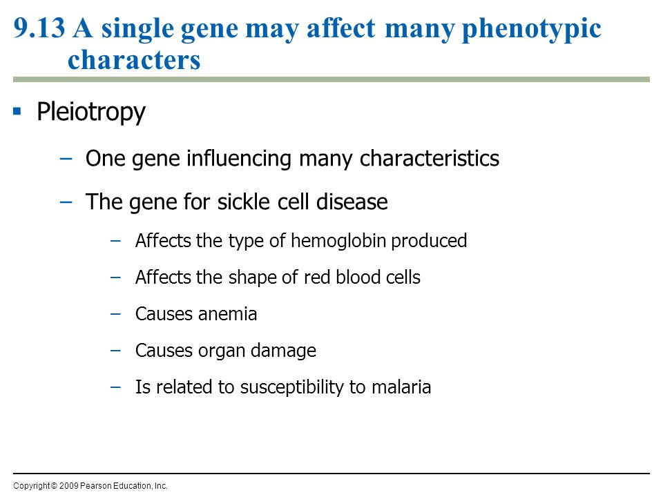 9.13 A single gene may affect many phenotypic characters