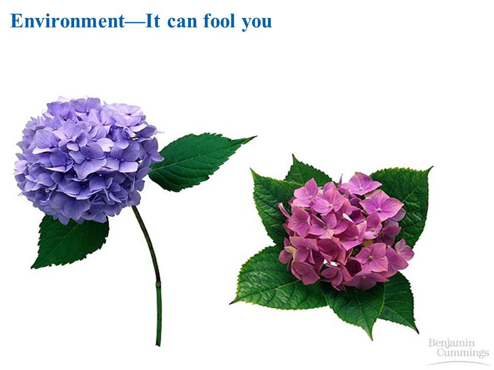 Environment—It can fool you