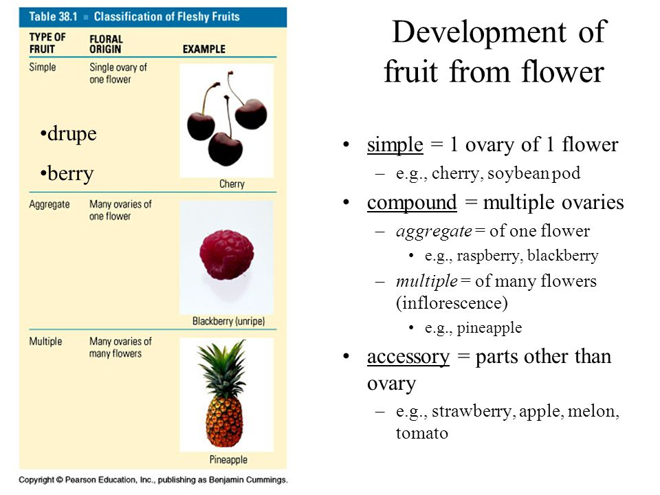 Development of fruit from flower