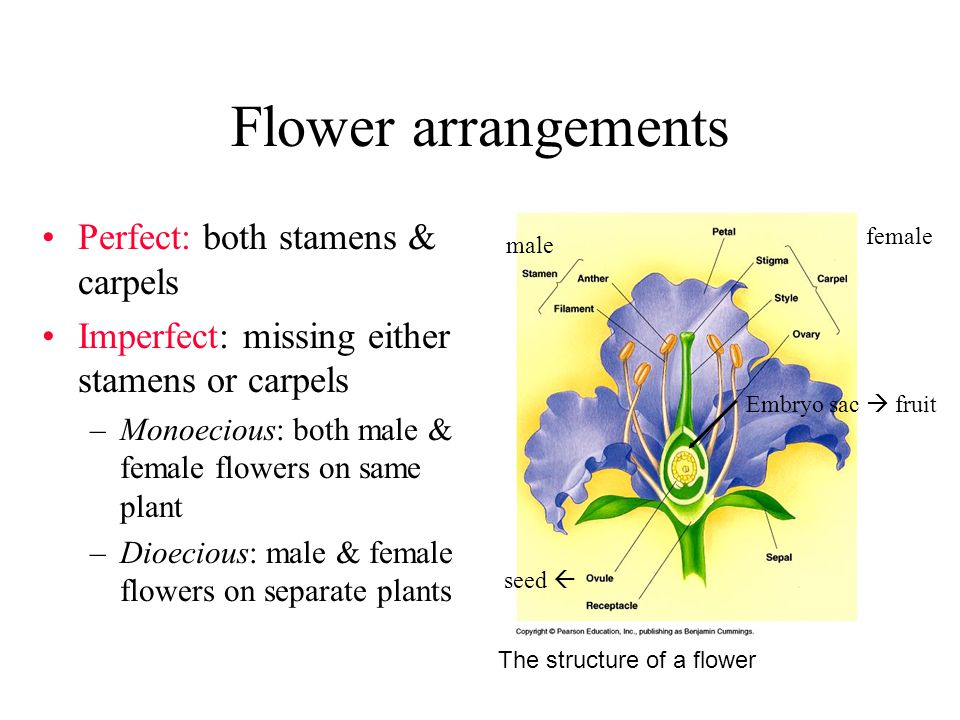 Flower arrangements Perfect: both stamens & carpels