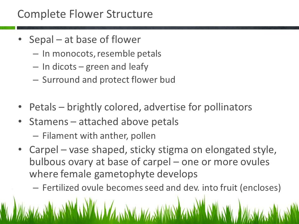 Complete Flower Structure